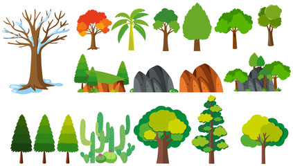 Different types of trees.