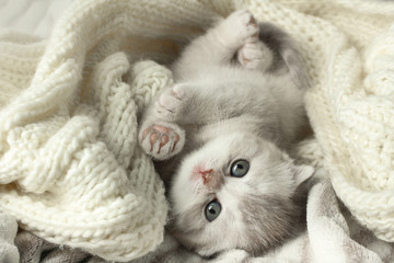 Cute little gray kitten lying on a soft blanket.