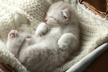 Cute little gray kitten sleeps in a basket.