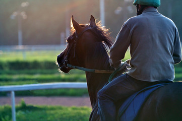 Race horse and the rider early in the morning on a hippodrome