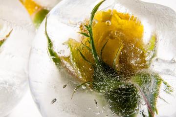 Gelbe Rose in kristallklarem Eis 2