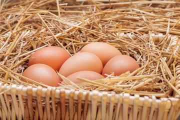 The eggs laid with hay.