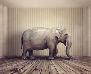 Elephant in the room metaphor for business problem