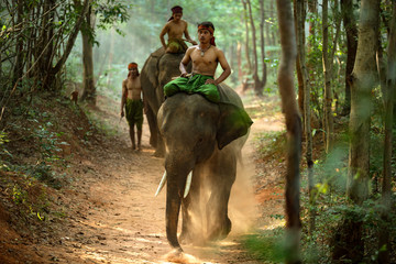 mahouts and elephants are walking to find water.