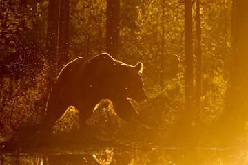 A bear walking beside a lake.
