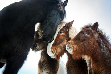Horses huddling together.