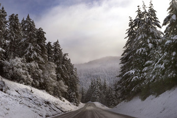 Road amidst snow covered pine trees against sky