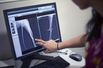 Cropped image of veterinarian pointing at x-ray on computer in clinic