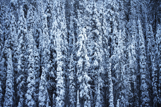 Full frame shot of snow covered trees in forest