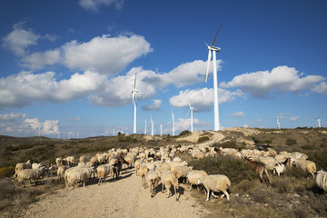 Windmills and Flock of sheep on wind farm against cloudy sky
