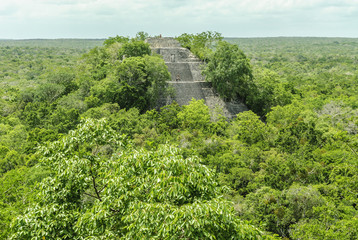 sight of the thickness, of the treetops and of other pyramids in the reservation of the biosphere, national park and archaeological place of Calakmul, Quintana Roo, Mexico