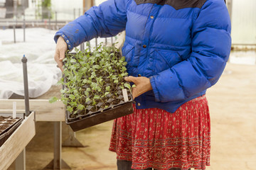 Midsection of woman holding seedling tray while standing in greenhouse