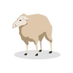 sheep color illustration design