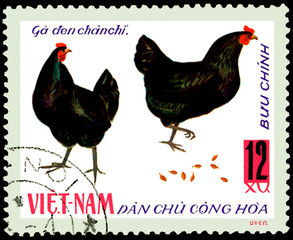 VIETNAM - CIRCA 1968: postal stamp printed in Vietnam shows two black hens, a series of domestic fowl