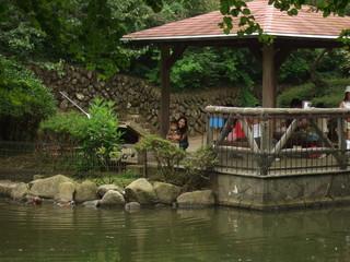 水辺 池 親子 公園