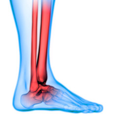 Human Body Bone Joint Pains Anatomy (Foot Joints and Bones)