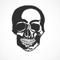 squelette, tête de mort