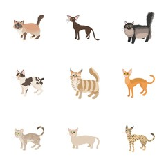 Cat family icons set, cartoon style
