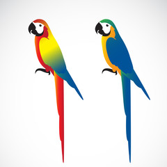 Vector of a parrot (Macaws) on white background. Wild Animals.
