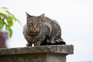 Katze auf Zaunpfahl