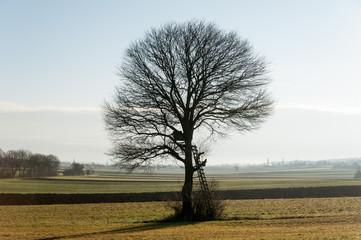 Frei stehender Baum auf Feld