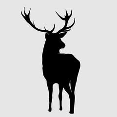 Black deer.