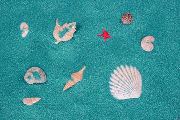 Seashells on a Purple Background