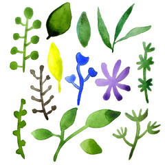 Set of plant elements. Green leaves on a white background. Watercolor. Hand-drawn Botanical elements.
