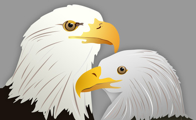 Vector Illustration of Eagle Head