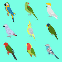 Set of color flat parrots icons
