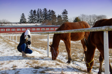 Girl photographing the horses in the paddock, young woman taking picture of horses at winter season