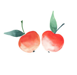 Two bright red ripe apples isolated watercolor hand sketch
