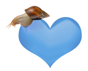 Snail on heart