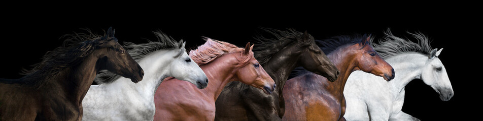 Photo sur cadre textile Chevaux Six horses portraits isolated on a black background