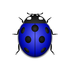 Ladybug small icon. Blue lady bug sign, isolated on white background. 3d volume design. Cute colorful ladybird. Insect cartoon beetle. Symbol of nature, spring or summer. Vector illustration