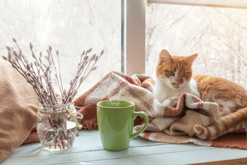 Cup of coffee, books, branch of willow tree, wool blanket and red-white cat on windowsill. In the background snow tree pattern on window. Cozy home concept.