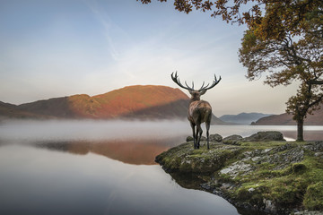 Stunning powerful red deer stag looks out across lake towards mo