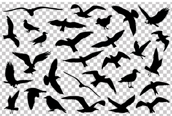 Set of birds silhouettes isolated. Vector illustration