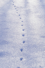 High angle view of animal footprints on snow covered field