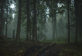 Scenic view of trees growing forest during foggy weather