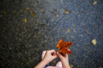 Cropped image of girl holding maple leaf while standing on wet road