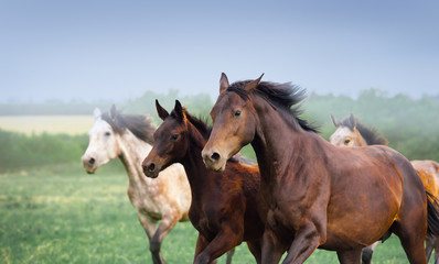 Mare with foal galloping in a field. Three horses close-up on a background of dark sky and beautiful scenery. Herd free