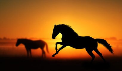 Silhouette of beautiful horse on a background of sunrise. Stallion galloping in a field on a background of other horses. Orange and red colors