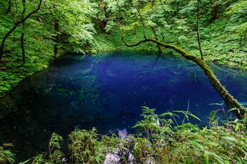 japanese landscape - shirakami - juuniko - aoike - aomori