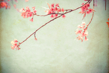Wall Mural - Vintage paper postcard - beautiful sakura tree flower (cherry blossom) in spring. vintage color tone style.