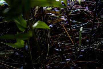 newly fern frond