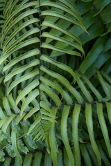 Jungle fern leaves