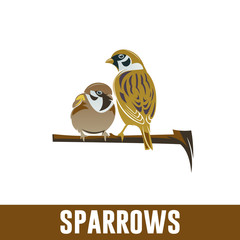 two sparrows on branch, isolated image