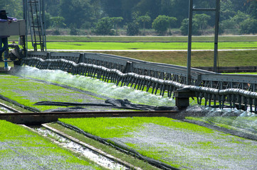 Watering for seedings rice with automatic.