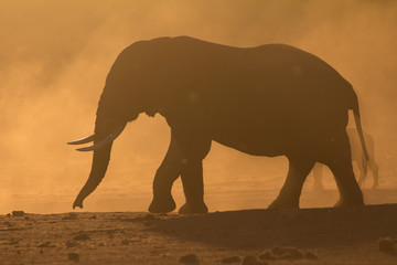 Elephant silhouette at sunset